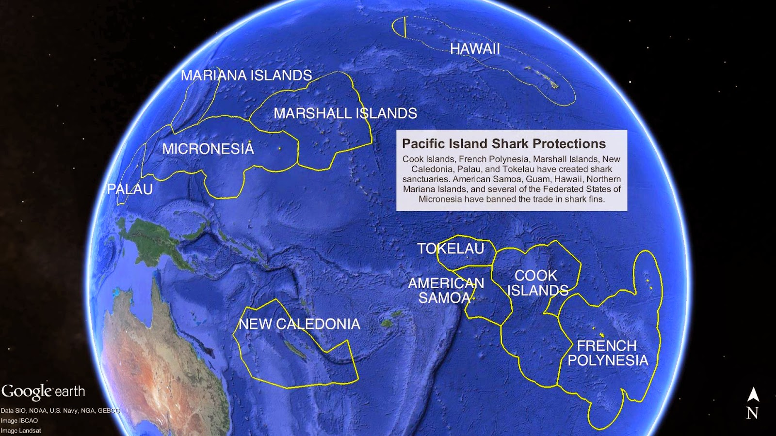 sharks are protected