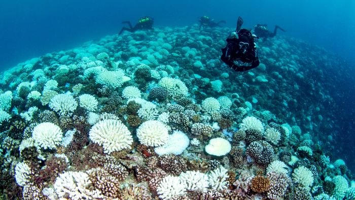 coral bleaching around Moorea