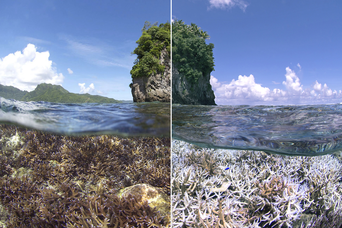 coral - before and after bleaching