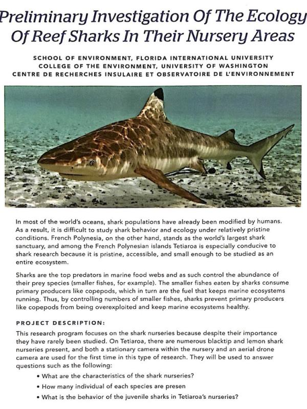 read the pdf: ecology of reef sharks in their nursery areas