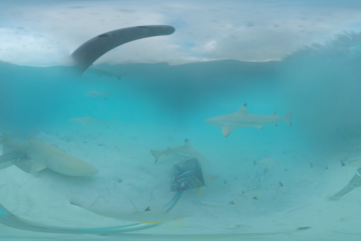 shark observation in 360º