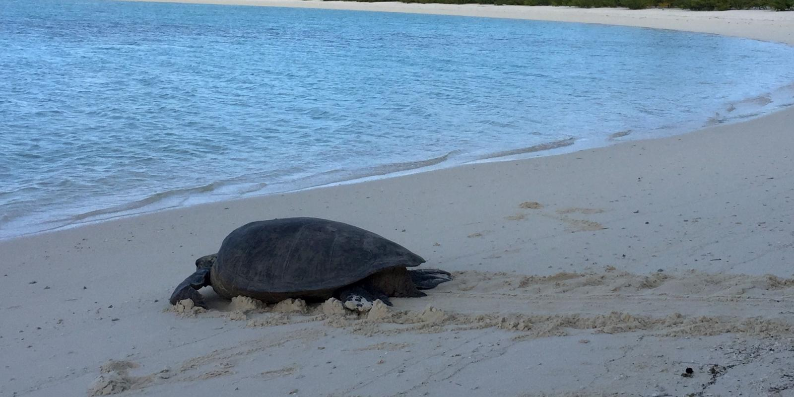 turtle on the sand