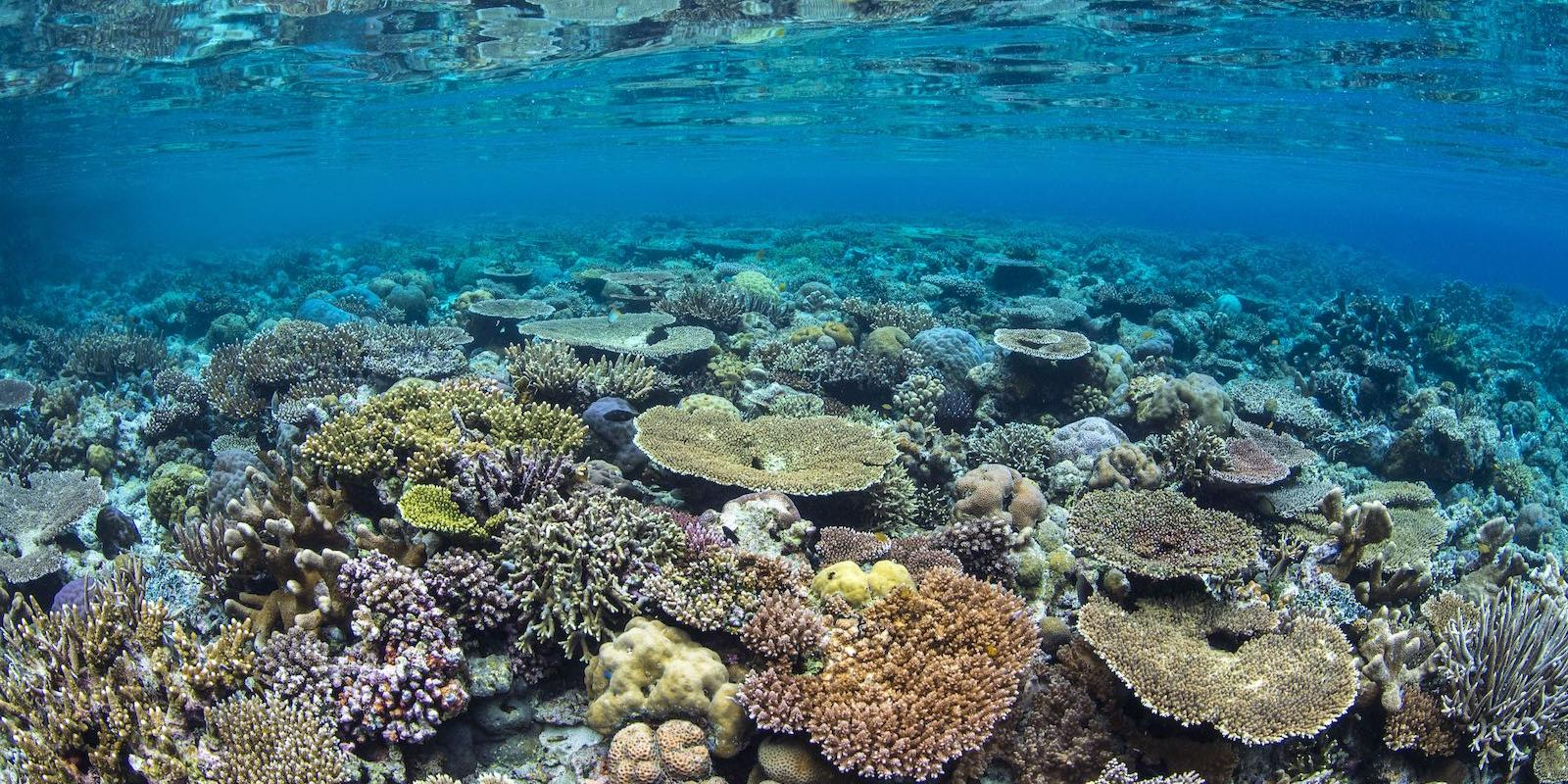 coral reef - photo credit Alex Mustard
