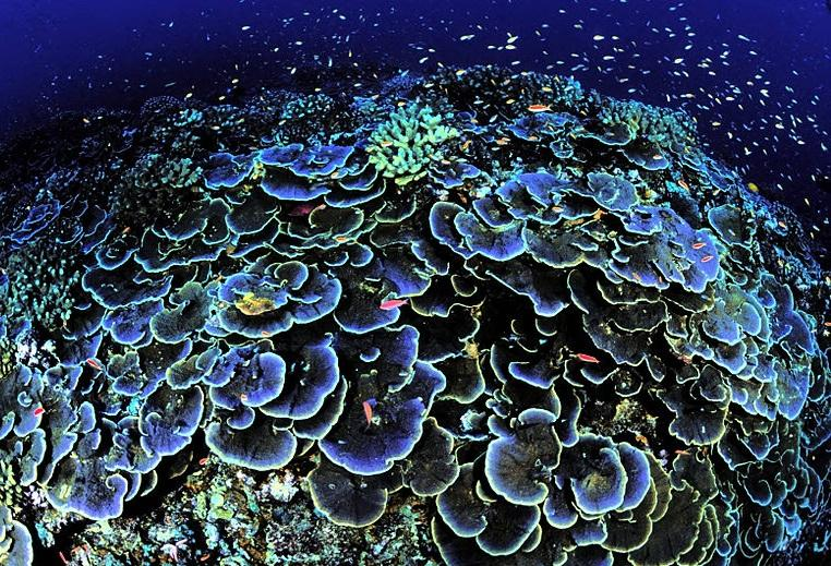 coral reef in the deep