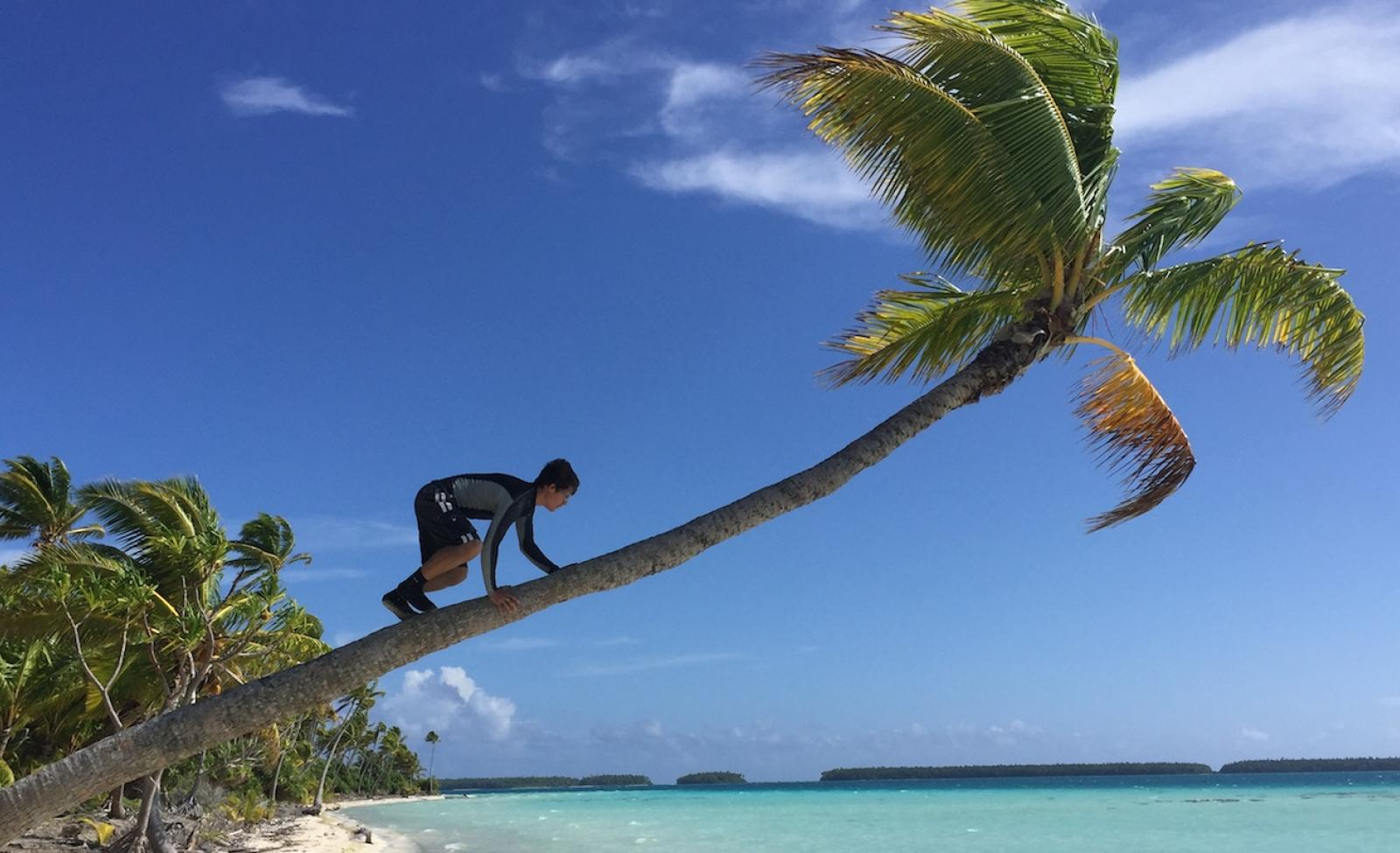 climbing a coconut tree